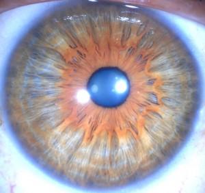 oog c